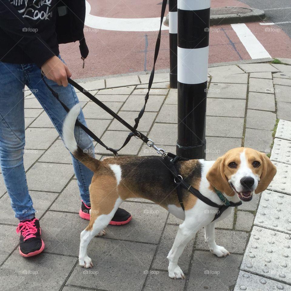 walking the smiling dog