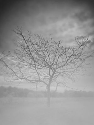 Autumn most. A stark tree surrounded by fog on a cold autumn morning.