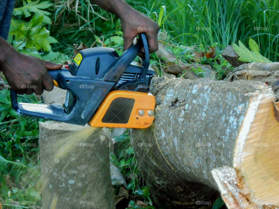 Chainsaw Cutting Through Tree Trunk
