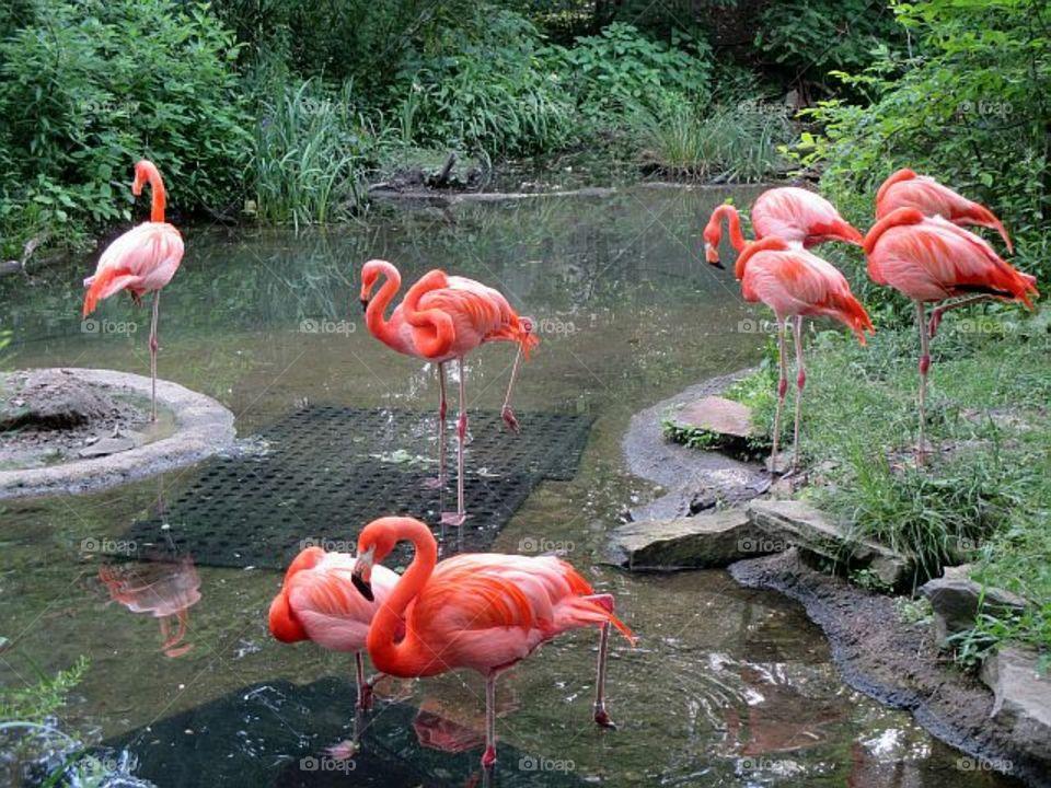 Closeup of flamingos bird in lake