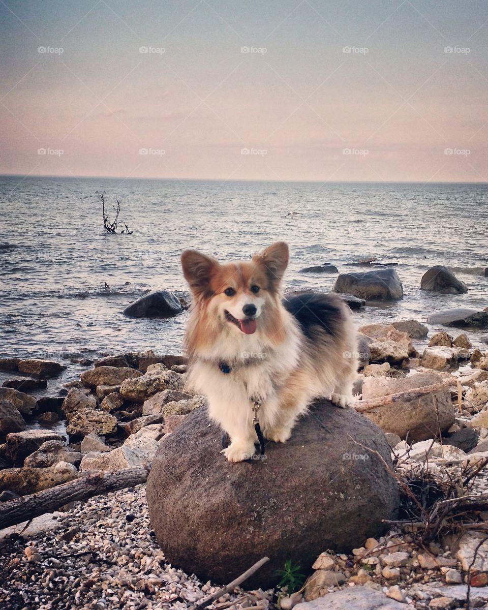 Happy Beach Corgi
