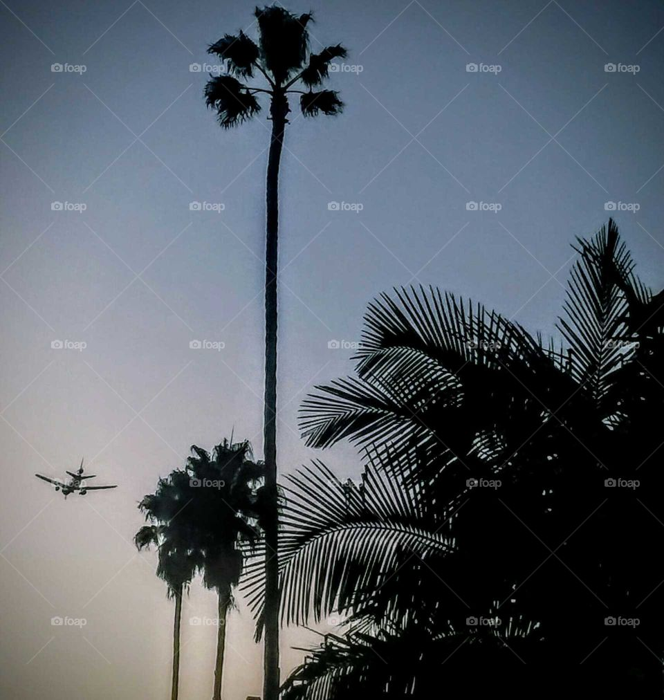 Flight at Dusk Silhouette