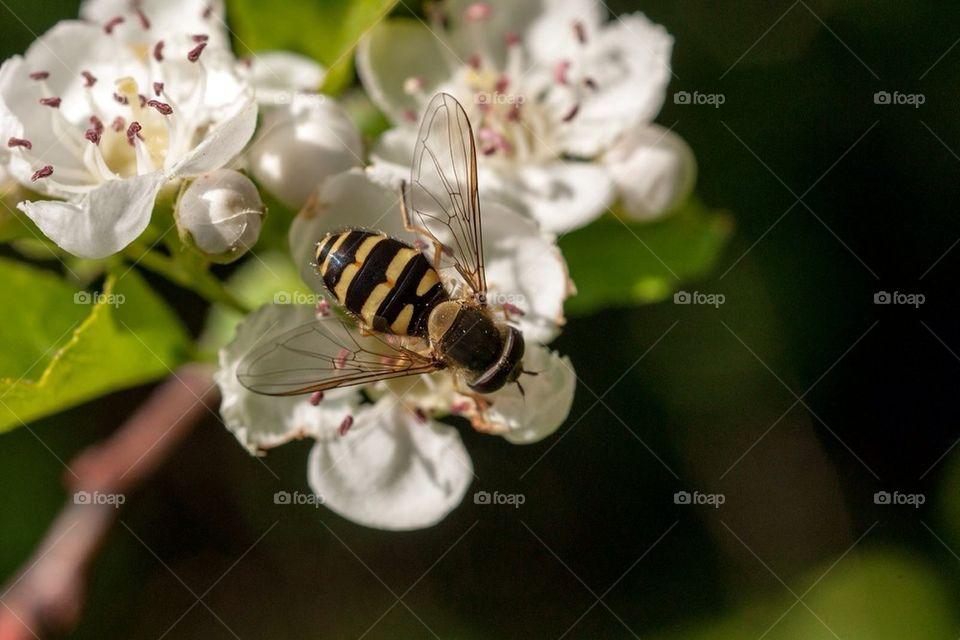 flower summer blomma fly by cekari
