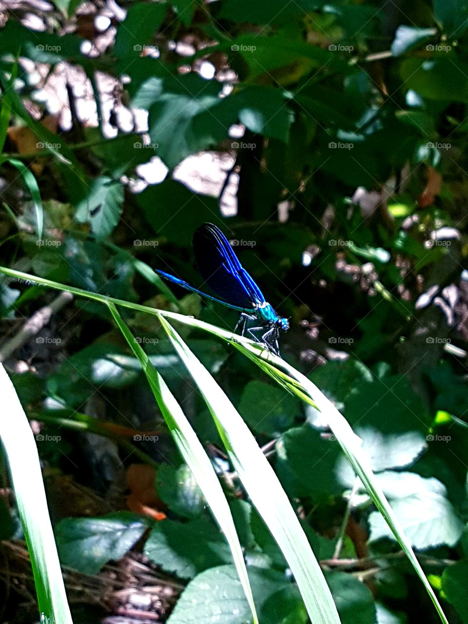 Blue dragonfly on a summer day.