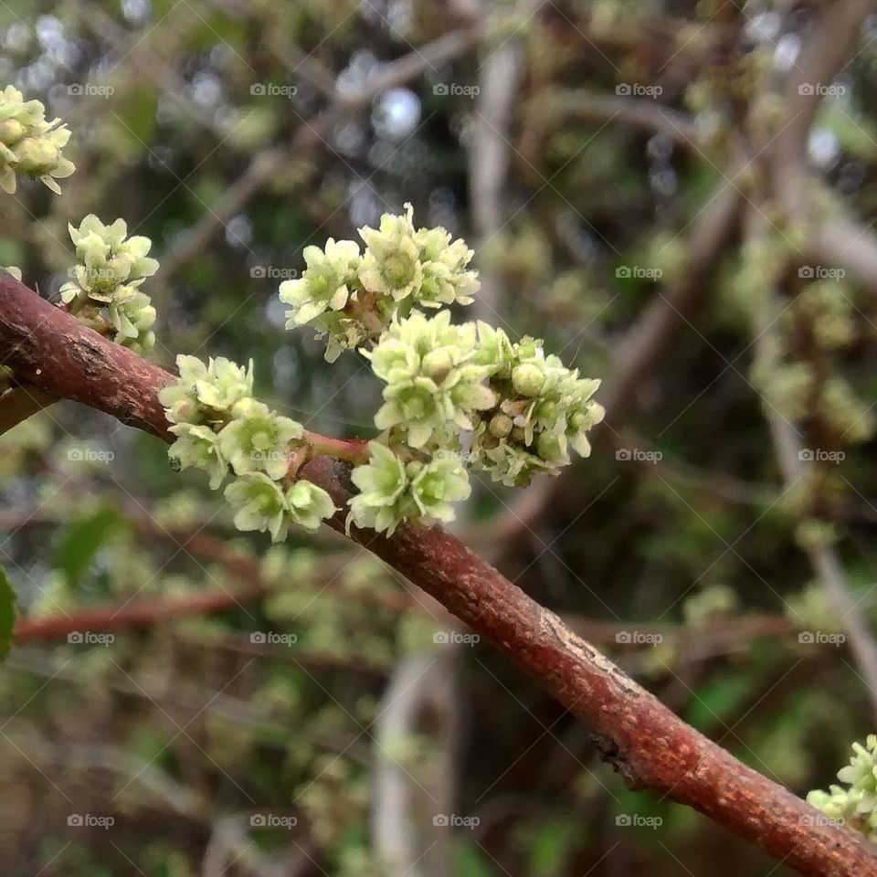 micro flowers lovely pic nature very big winter time very small flowers light green white colour.....
