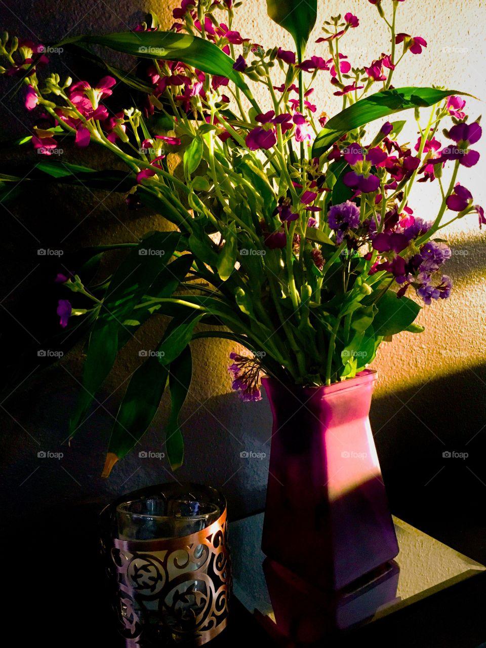 Warm Glow on Purple Flowers