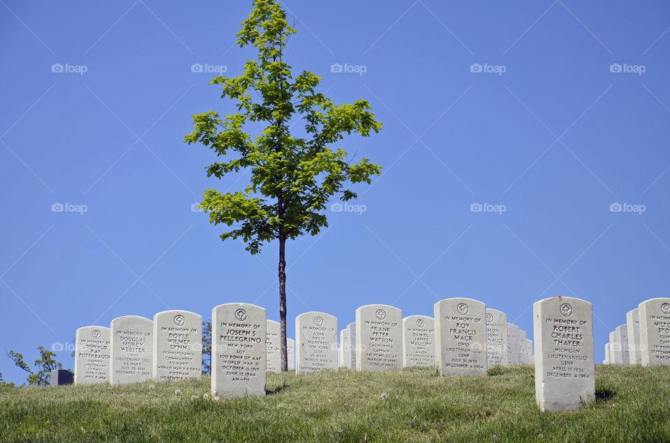Soldier Ground. Arlington Cemetery
