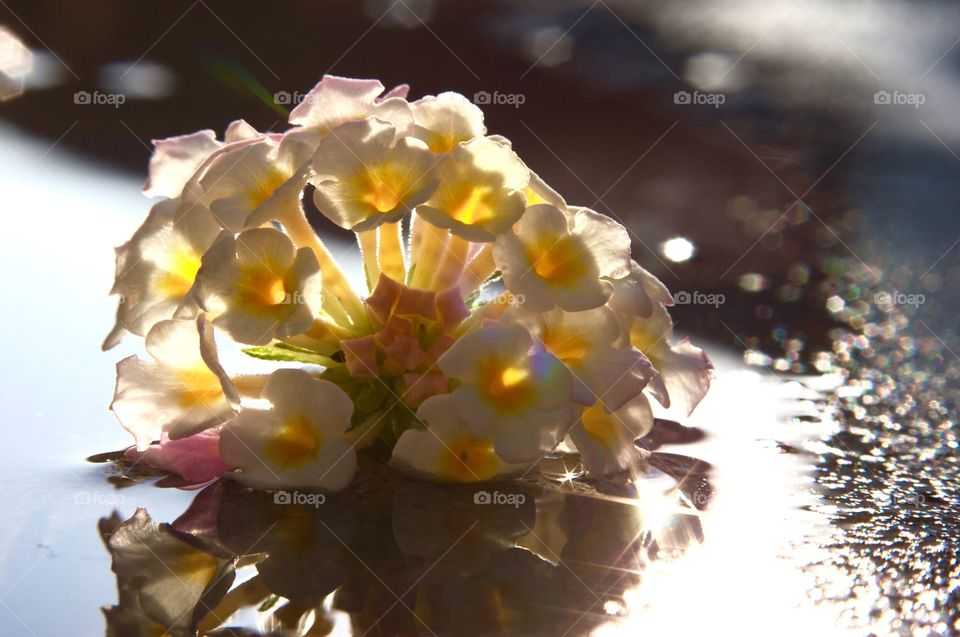 Close-up photo of flowers laying in a puddle of water.
