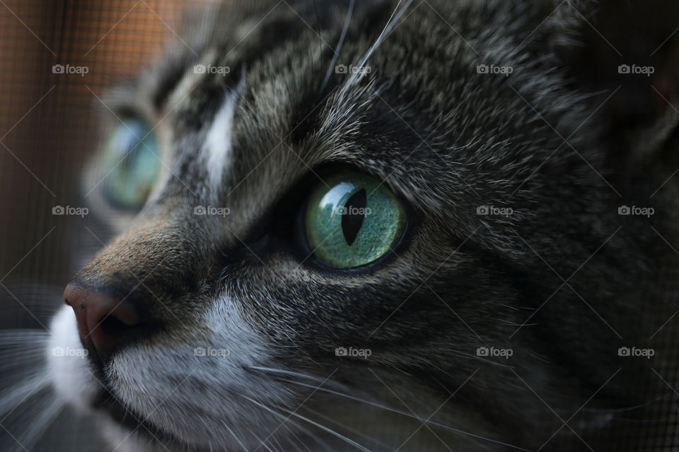 Close-up of a Cat eye