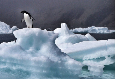 Penguin standing on iceberg