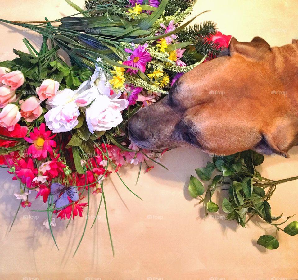 Dog Smelling Flowerd