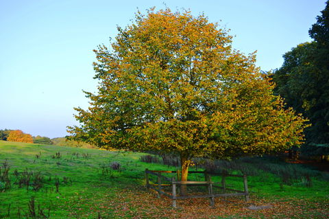 Apple trees during autumn