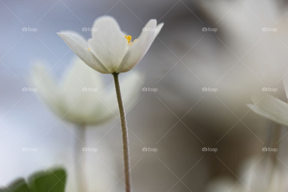 White flower blooming in spring