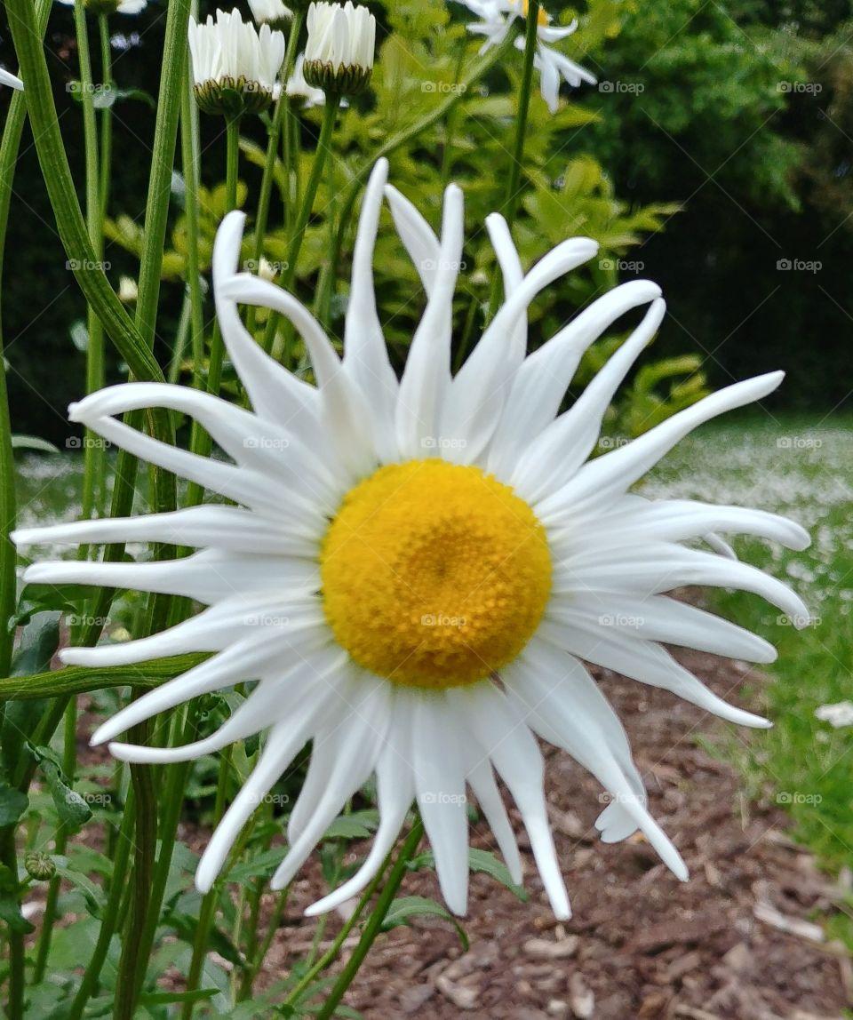Blume blühen Blüte Flower Summer Sommer