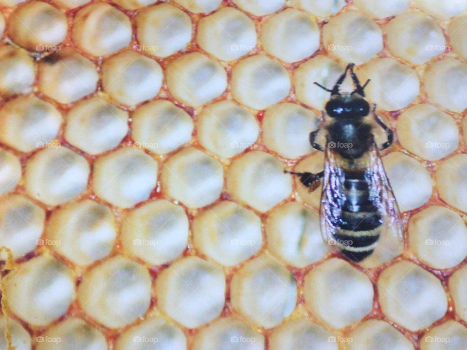 Honeycomb wasp honey bee hive work