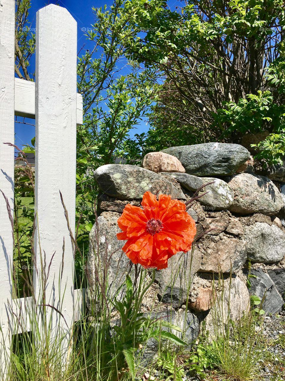 Bright orange flower in grass