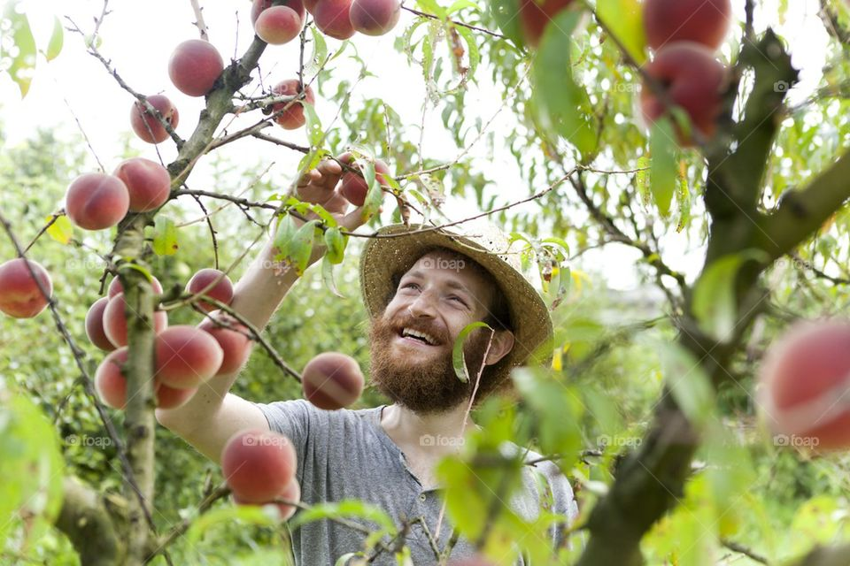 peaches gathering
