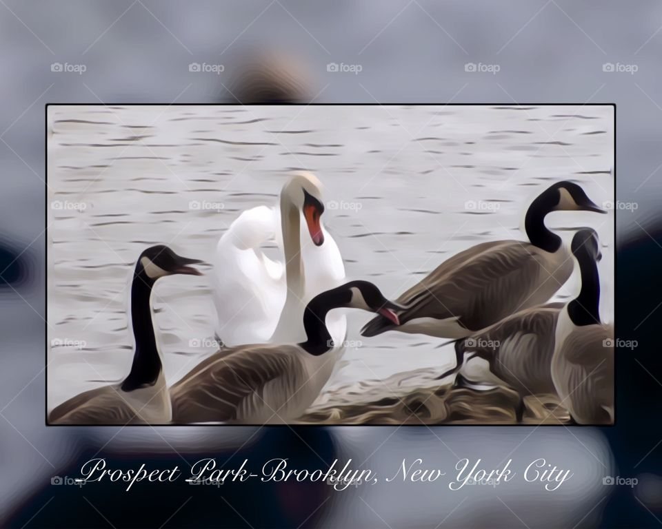 Prospect Park-Brooklyn, New York City