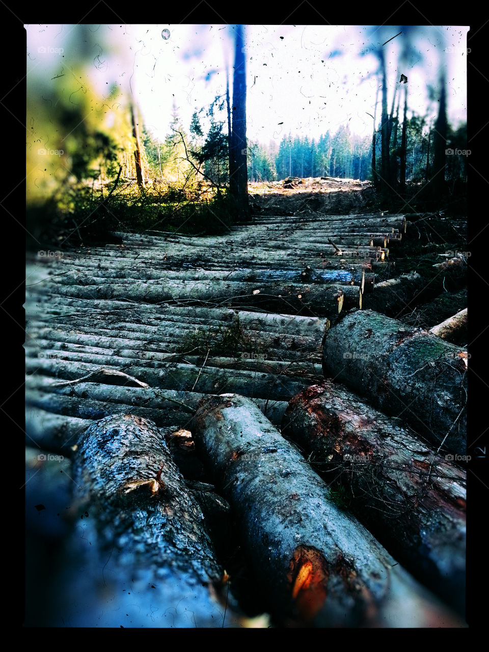 Cuted wood composition
