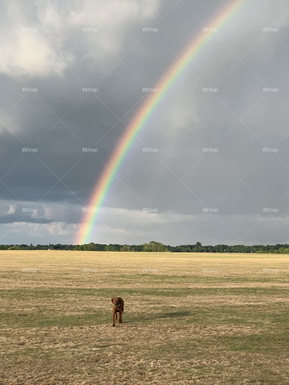 Treasure at the end of a rainbow