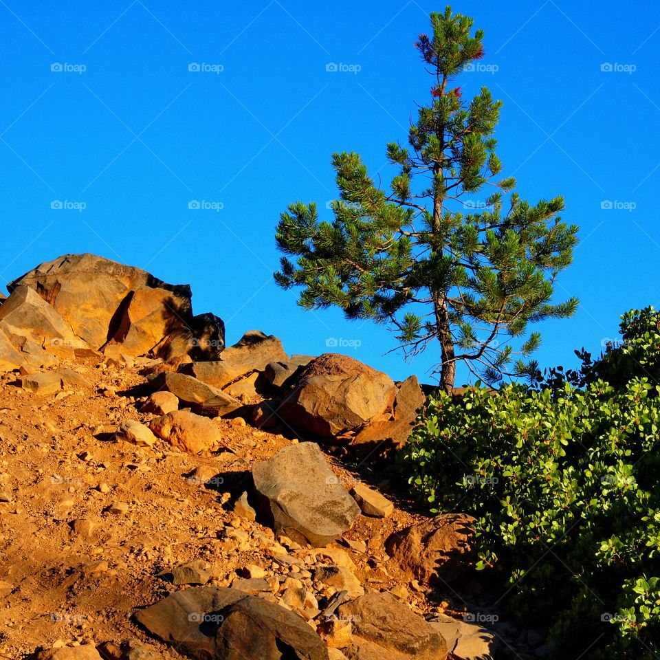 The golden light of sunset in the mountains of Oregon illuminate a small tree, manzanita bushes, and the rocky hill they are on giving the scene an other-worldly glow.