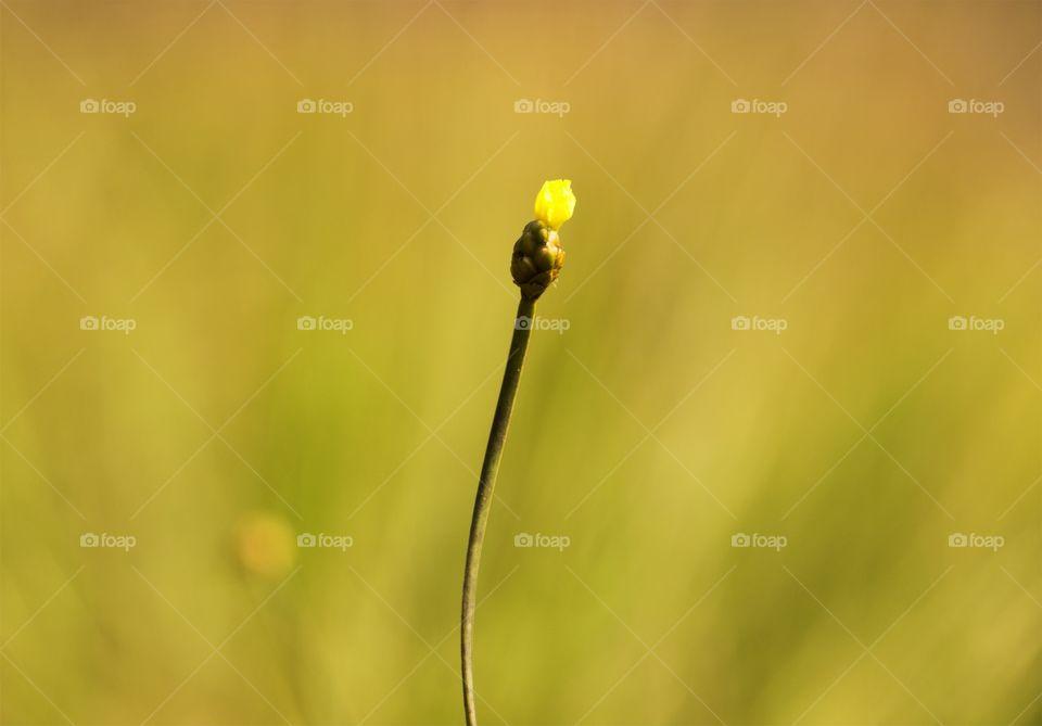 Flower Yellow for Summer
