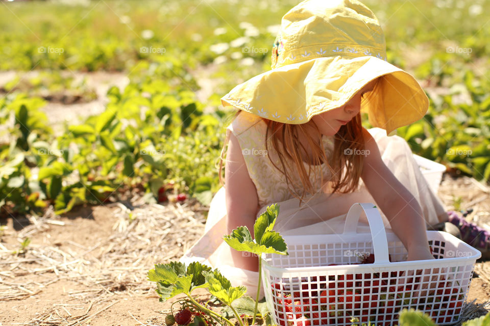 Girl with freshly picked strawberries in basket