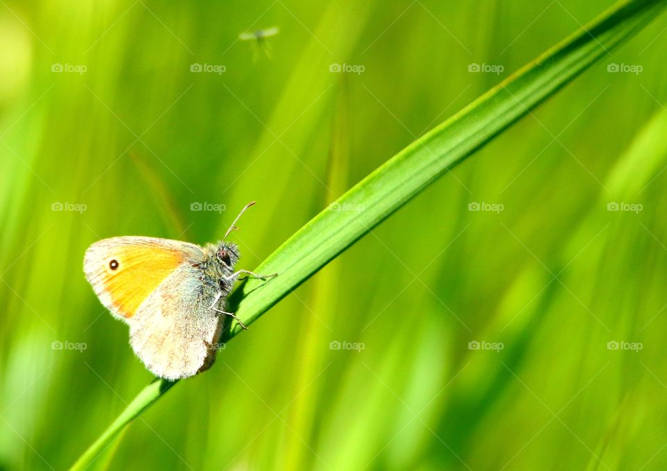Butterfly on a beautiful green blured background