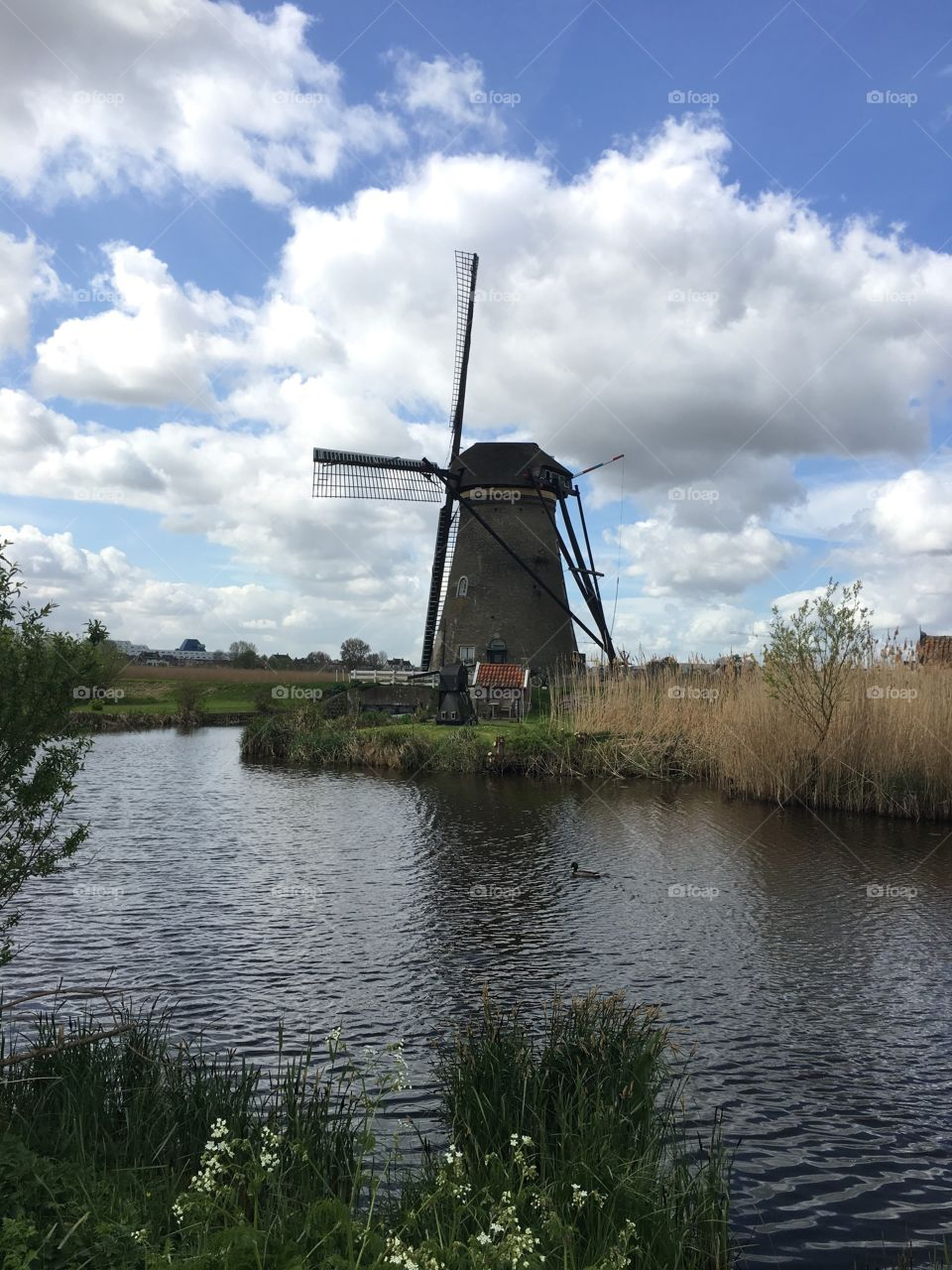 Got to see the windmills in Kinderdijk! It was a beautiful place.