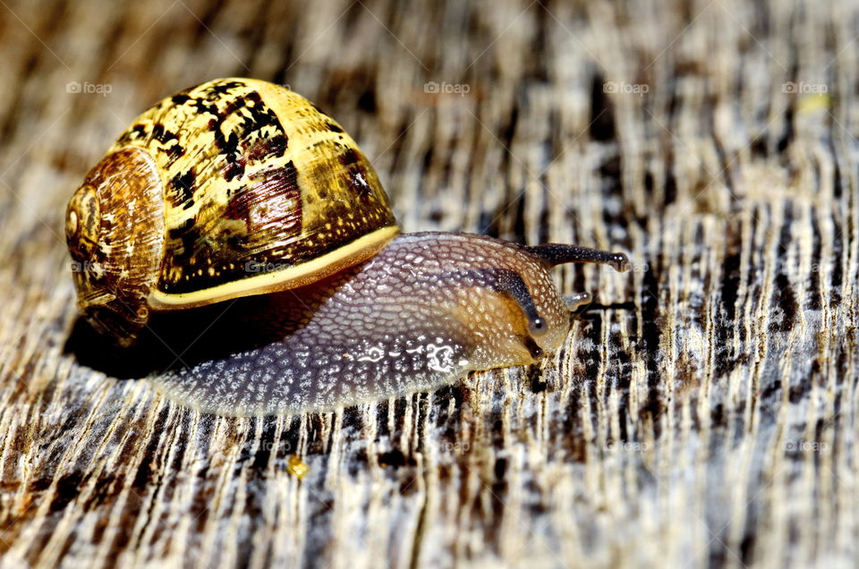 snail in the garden close up