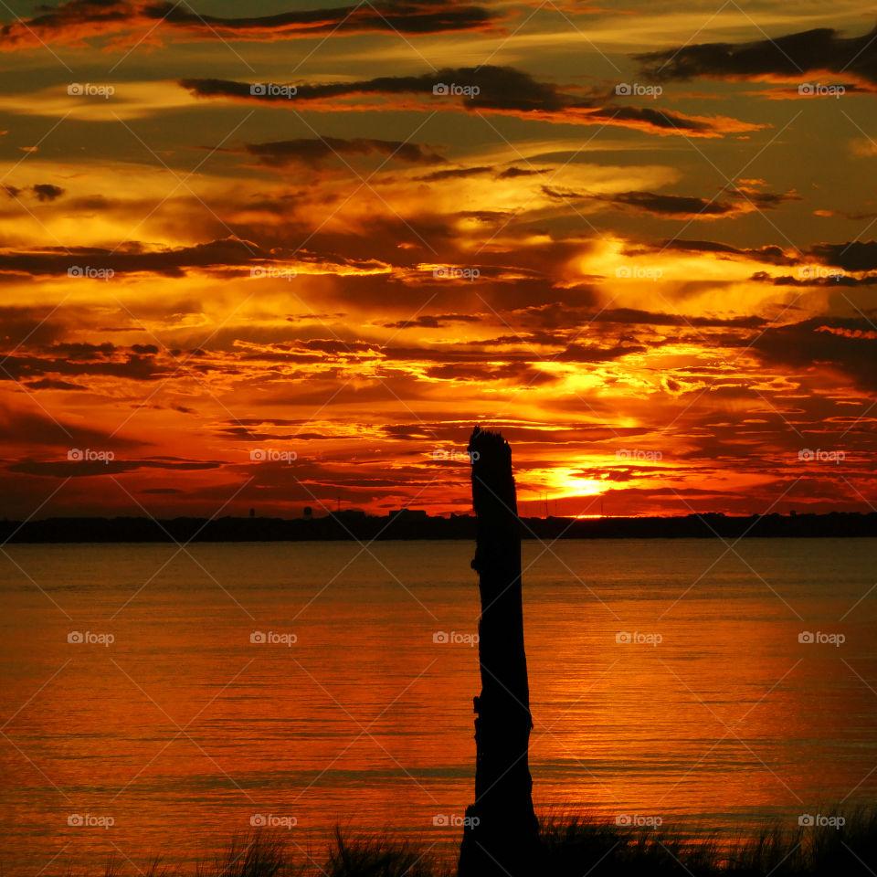 Silhouette of tree trunk near sea