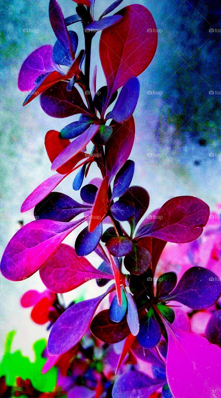 Flower, Color, Nature, Flora, Leaf