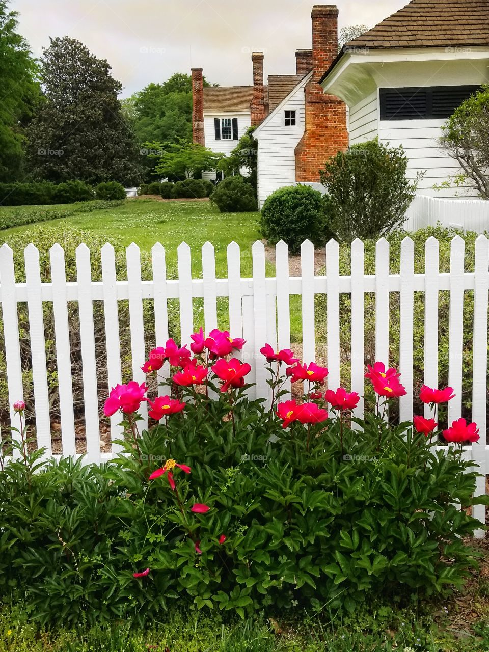 Flowers and a Fence
