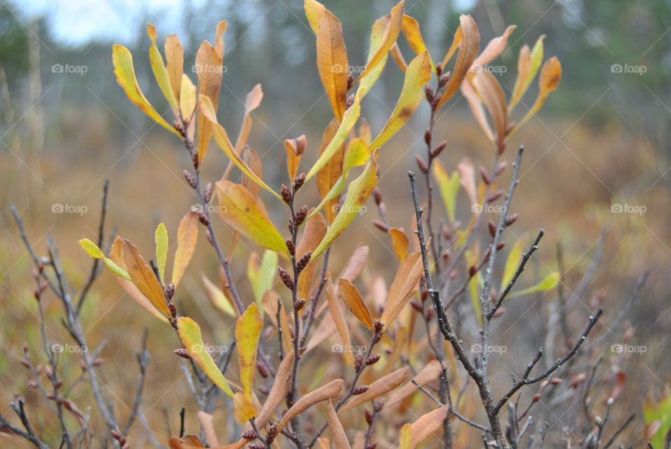 Close-up of branch in autumn