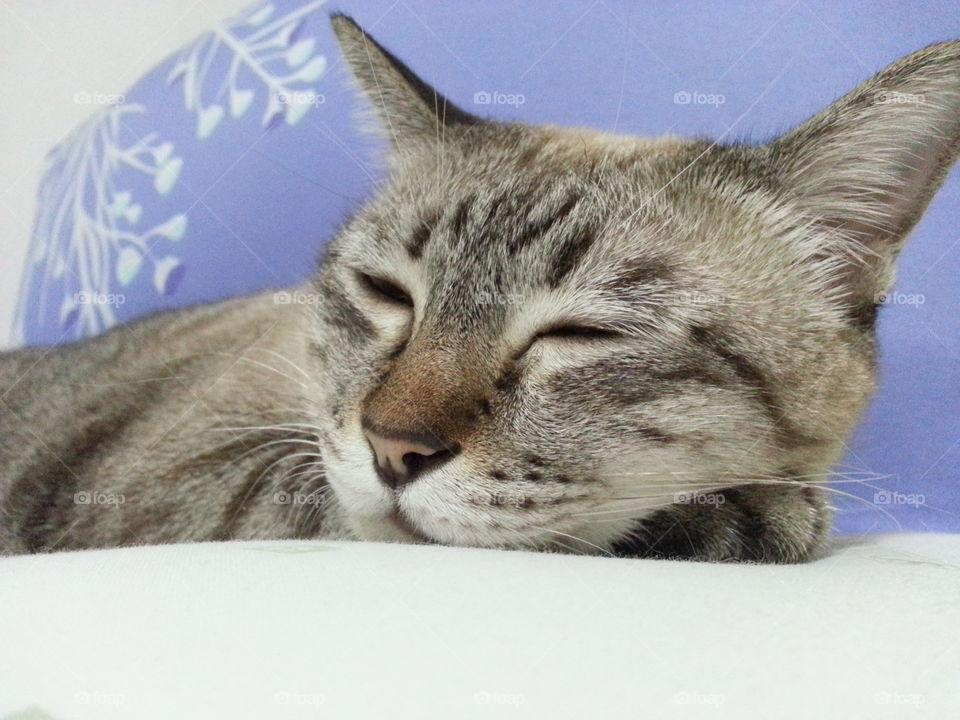 sweet dream. so relax sleep