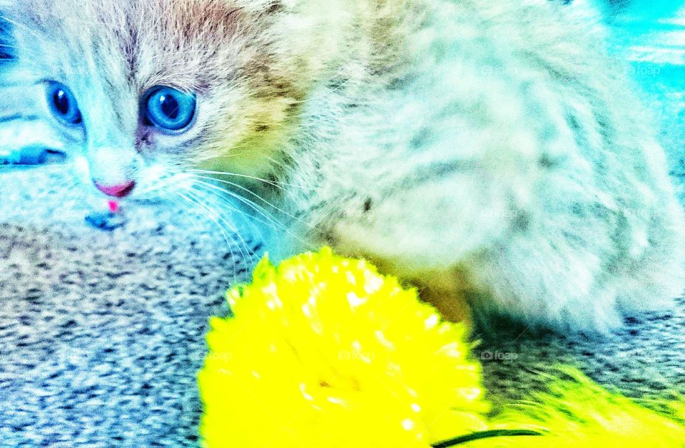 blue eyes . they call him mellow yellow