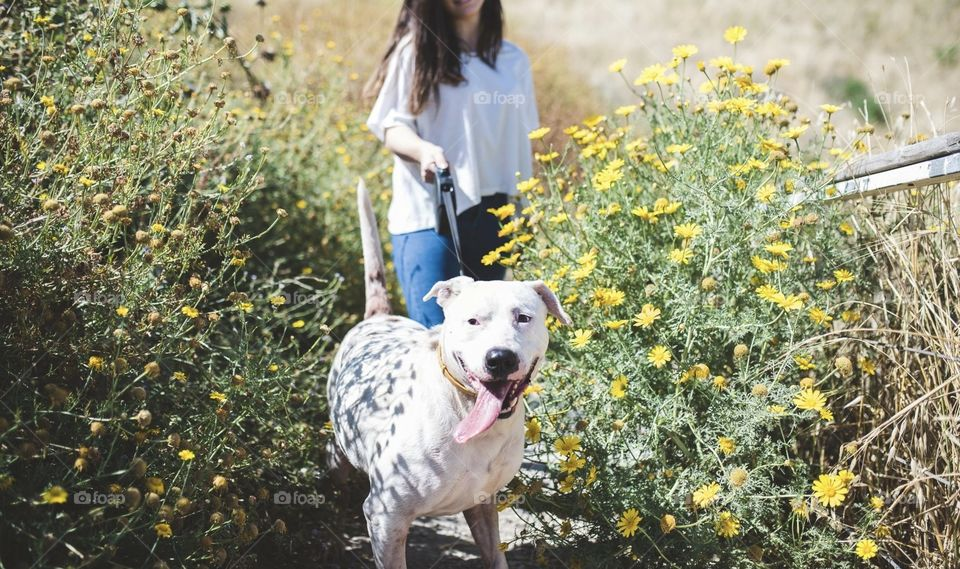 Spring doggy