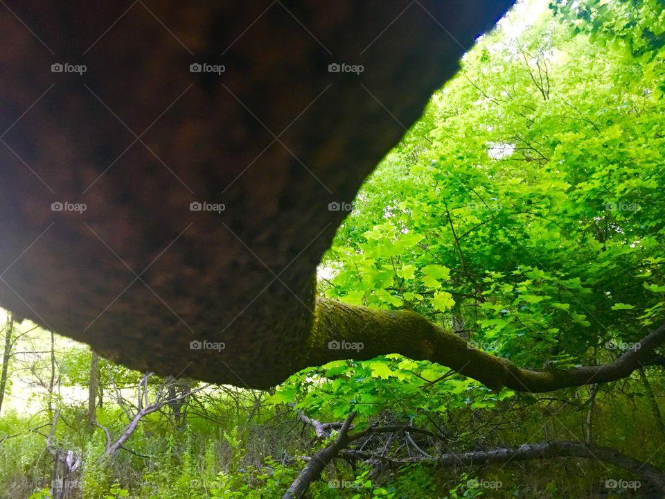 Underside of a trees branch
