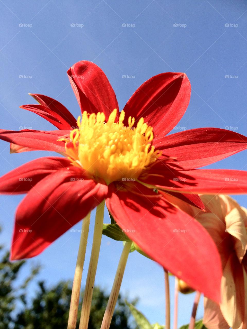 sweden garden flower sommar by elluca
