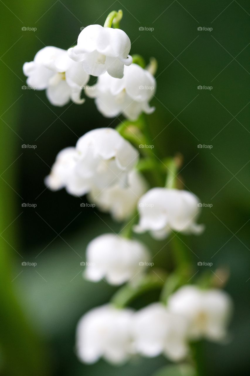 Close up white flowers.