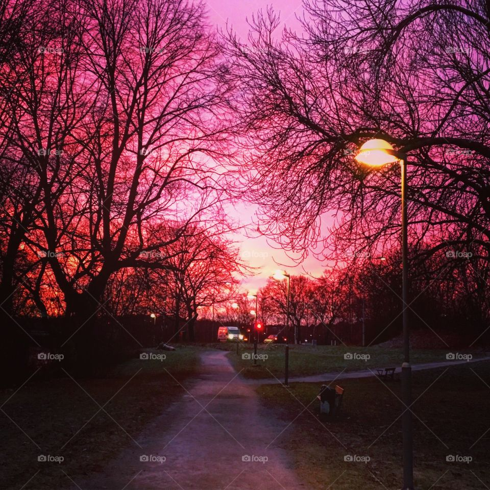 Park in sunset with purple sky