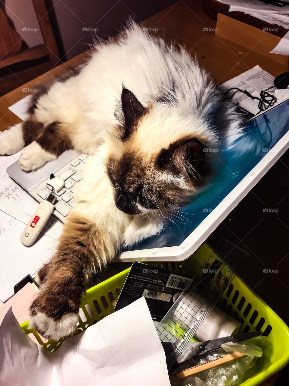 Кот кошки дом работа компьютер
