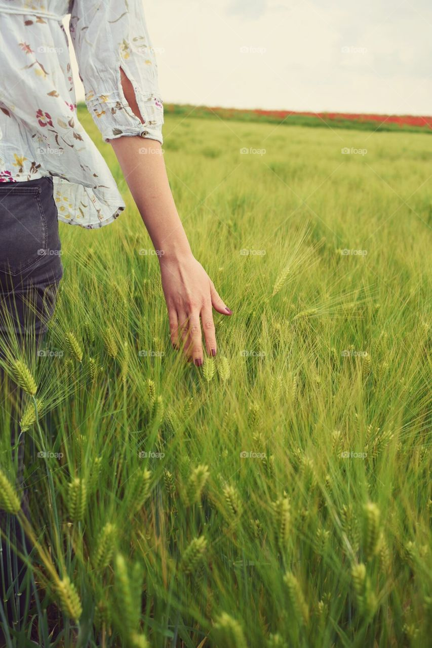 Female hand in the wheat