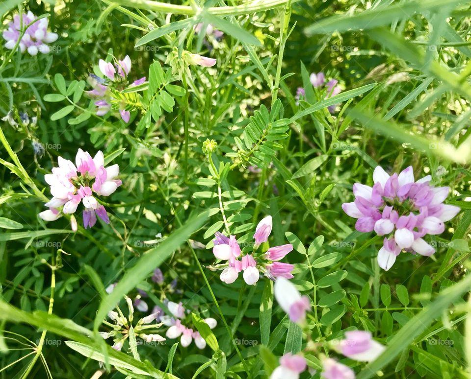 Ohio wild flowers
