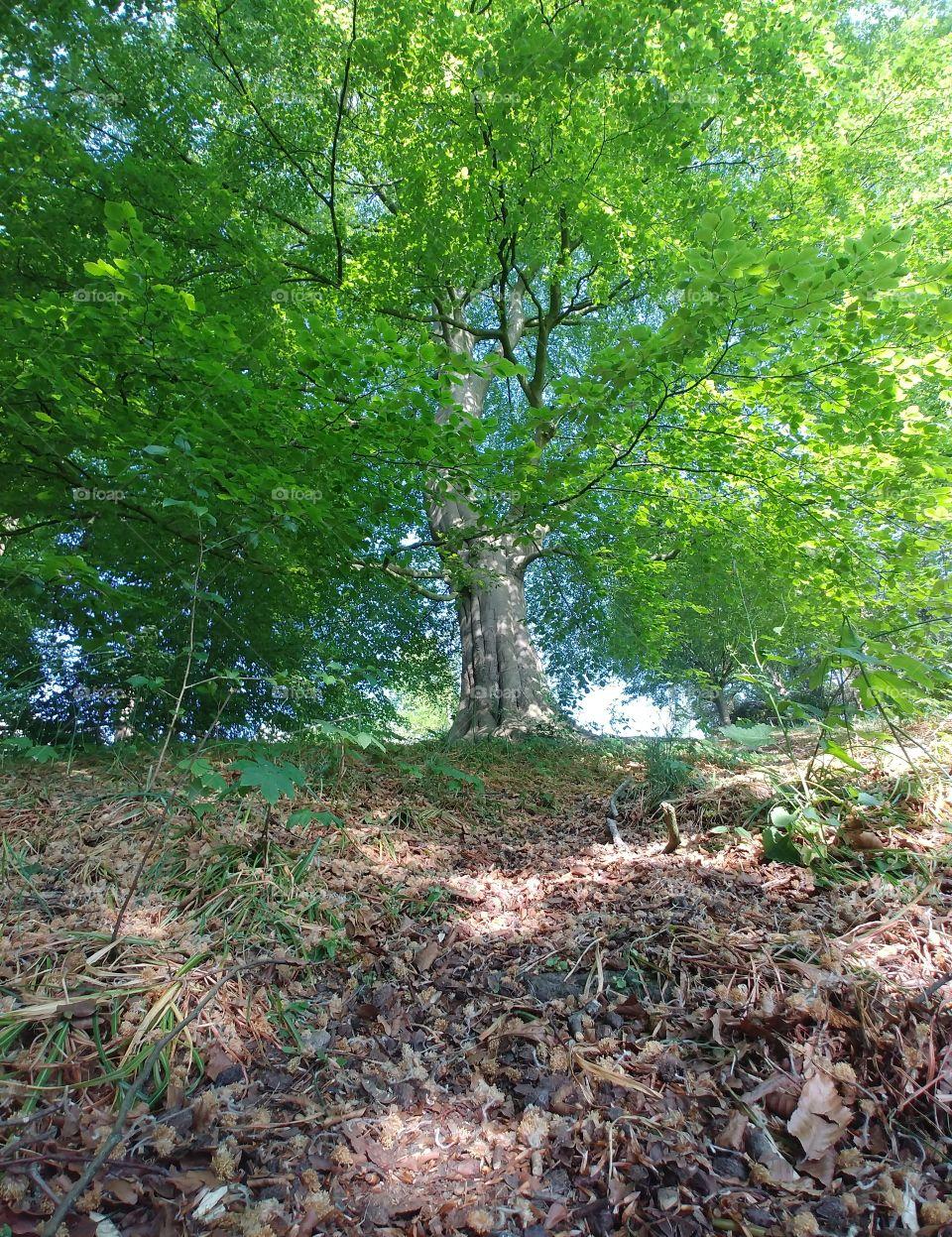 baum Natur nature tree big beautyful boden erde live. kraft grün outdoor