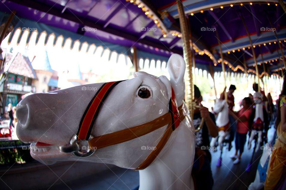 Horse . Festival day