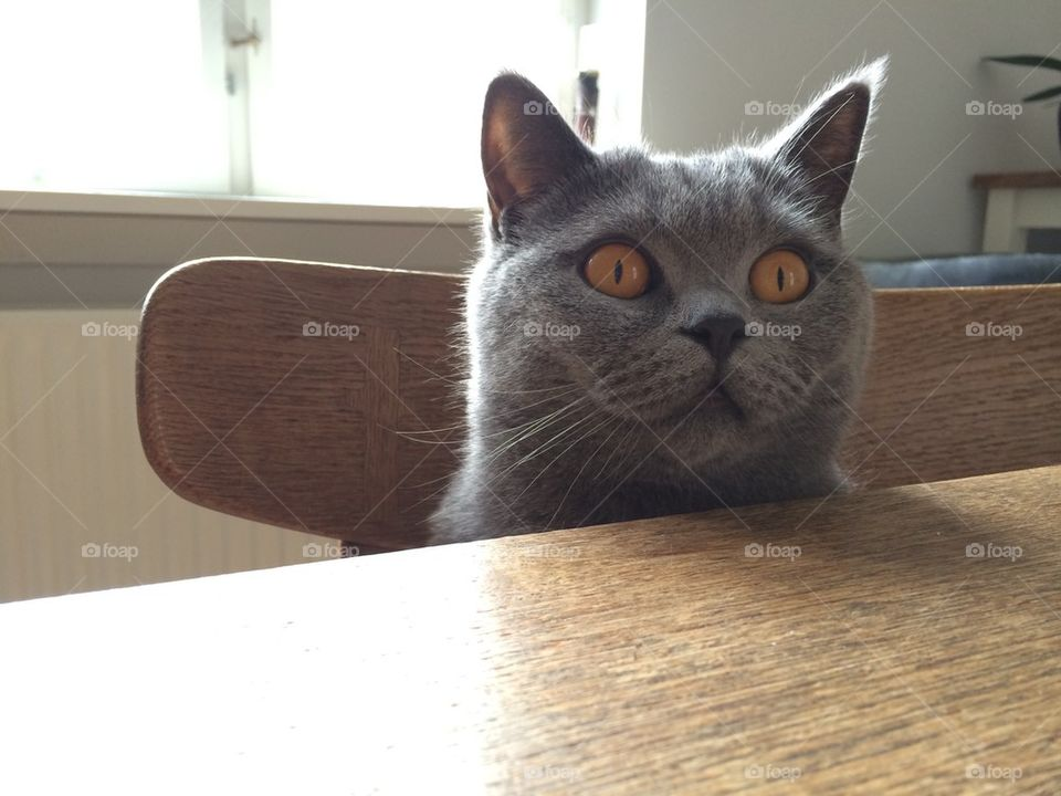Hugo at the kitchen table