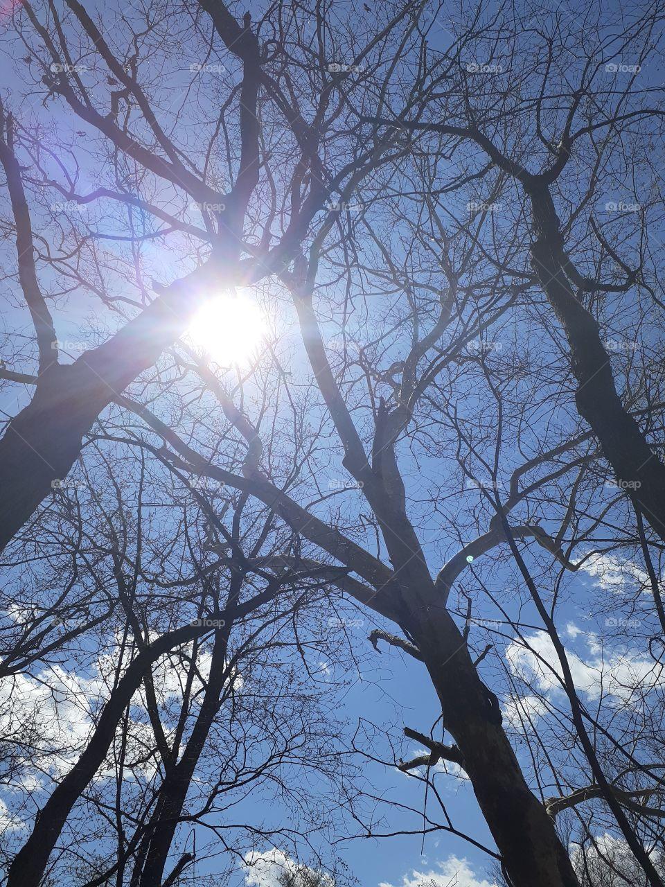 Naked Treetops
