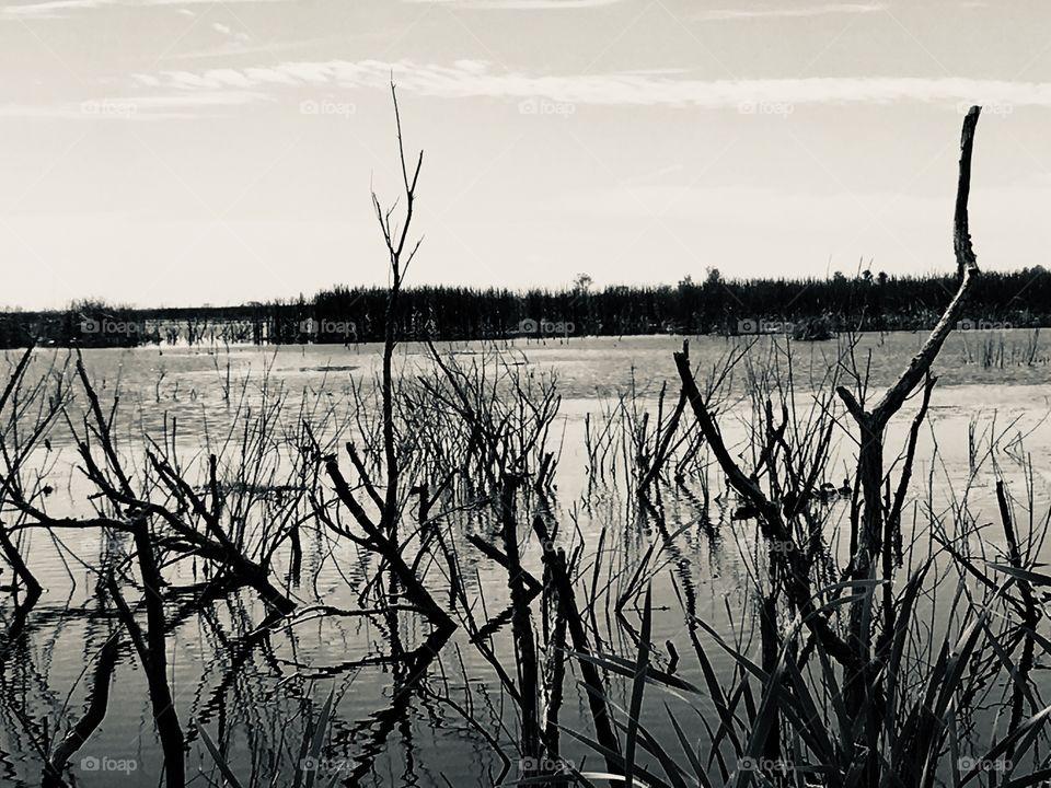 Lake Apopka Nature Drive in Florida