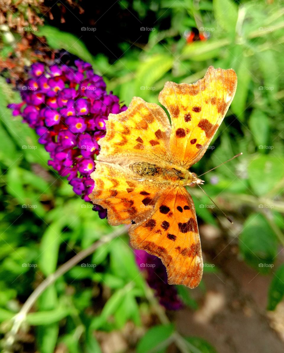 Butterfly, Nature, Insect, Summer, Flower